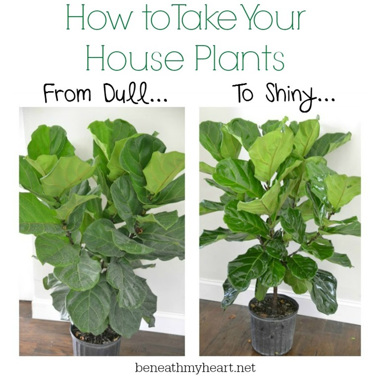 How To Make Your House Plants Shine Beneath My Heart